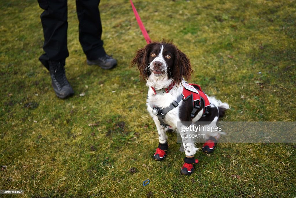 A man arrives with his English springer spaniel dog wearing shoes on the first day of the Crufts dog show at the National Exhibition Centre in...