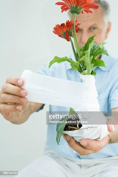 Man bandaging flowers with gauze, close-up