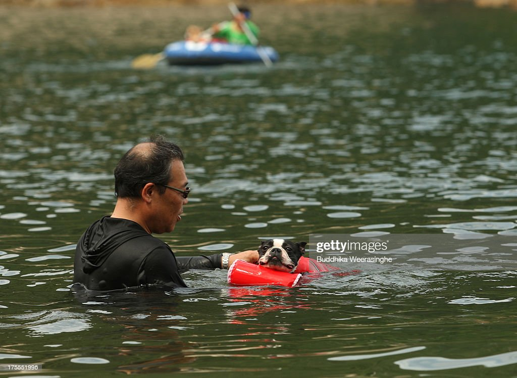 A man bathes his pet dog named Sora at Takeno Beach on August 4, 2013 in Toyooka, Japan. This beach is open for dogs and their owners every summer between the months of June and September. .