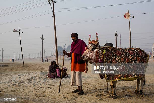 A man begs for donations as he stands with a cow on the banks of Sangam the confluence of the holy rivers Ganges Yamuna and the mythical Saraswati...