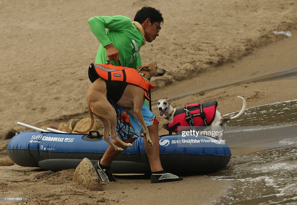 A man brings his dog Rodem for a swim at Takeno Beach on August 4, 2013 in Toyooka, Japan. This beach is open for dogs and their owners every summer between the months of June and September. .