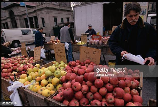 A man browses through the apple selection at Union Square's Greenmarket in Manhattan