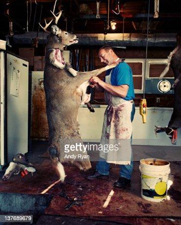 Man butchering deer in garage. : Stock Photo