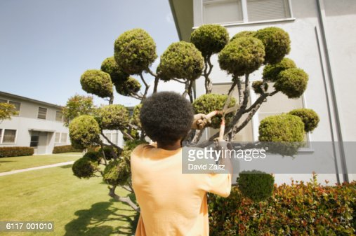 Man by Topiary Bushes