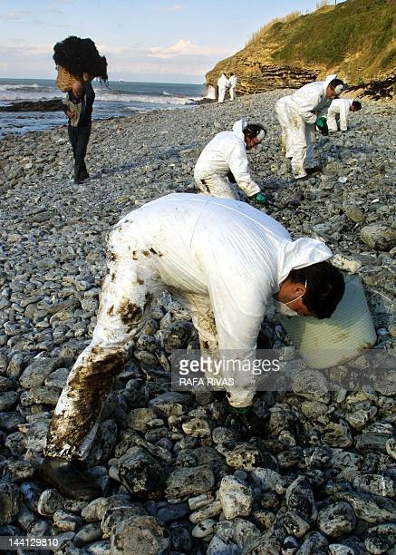 A man carries a basket full of seaweed 11 December 2002 while a group of workers removes oil deposits on La Arena beach in the Spanish northern...
