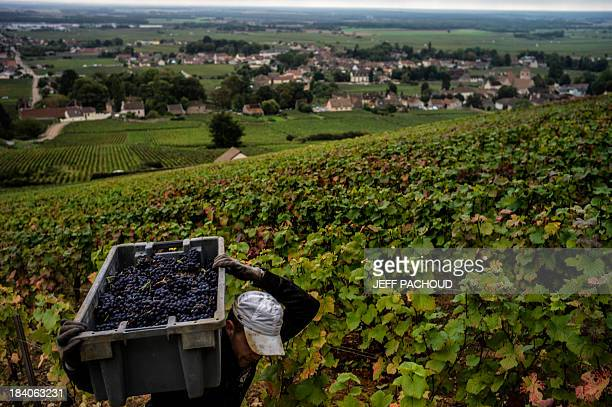 A man carries a crate of grapes in Faiveley in NuitsSaintGeorges during the harvest period on October 7 2013 AFP PHOTO / JEFF PACHOUD