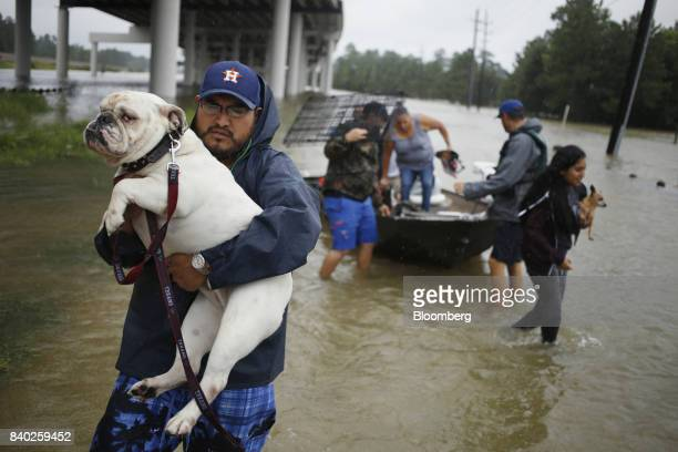 A man carries a dog after being rescued from rising floodwaters due to Hurricane Harvey at the Highland Glen housing development in Spring Texas US...