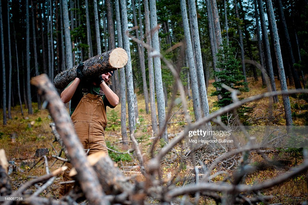 A man carries a large log in the woods.