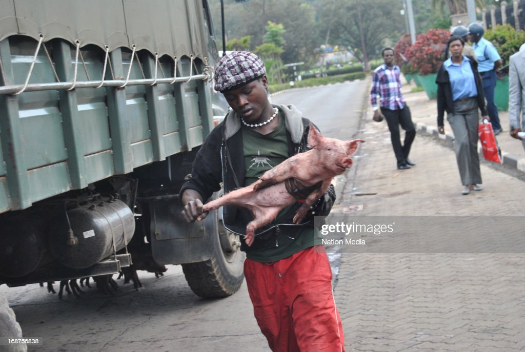 A man carries a piglet used by protesters on May 14, 2013 in Nairobi, Kenya. The protesters released a pig and about a dozen piglets outside parliament to show their anger at newly elected MPs demanding higher salaries. The protest was intended to portray the MPs as greedy..