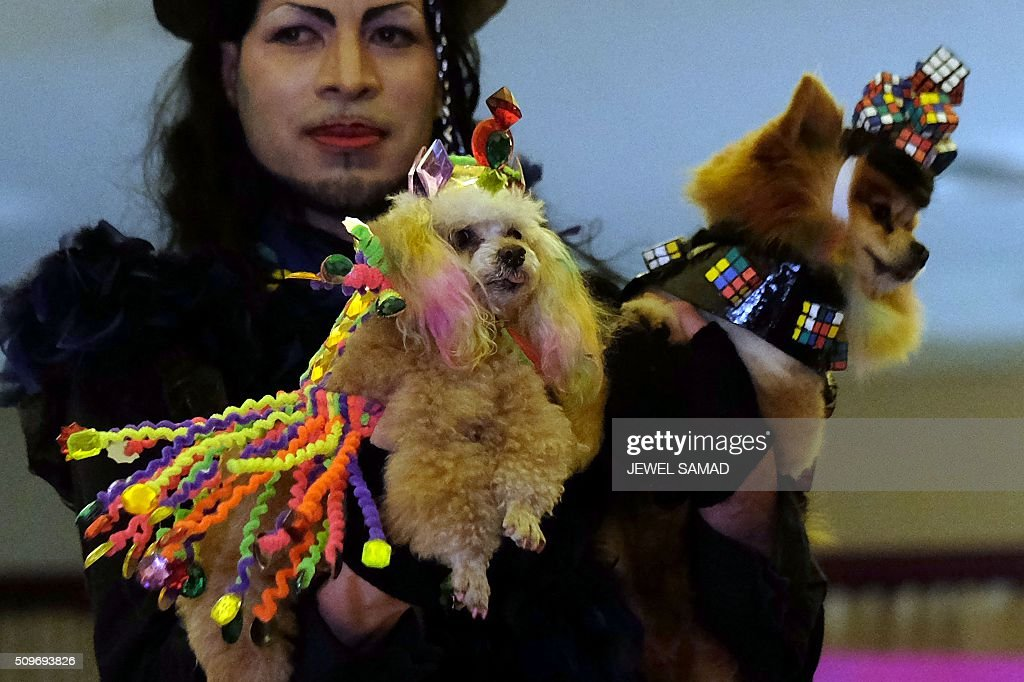 A man carries his dogs on the ramp to present outfits during the Pet Fashion Show in New York on February 11, 2016. / AFP / Jewel Samad