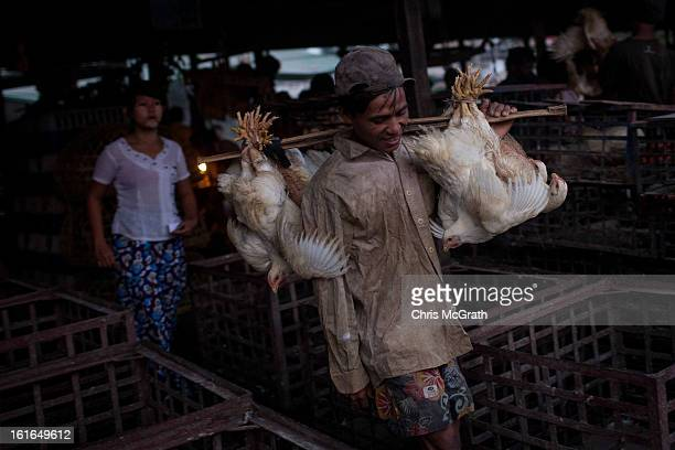 A man carries his purchased chickens from the Yangon Wholesale Chicken Market on February 14 2013 in Yangon Burma Buyers from restaurants shops and...