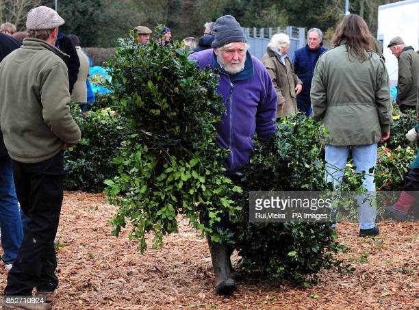 A man carries holly at the auction sale of holly mistletoe wreaths and Christmas trees at Bromyard Road Business Park Tenbury Wells Worcestershire