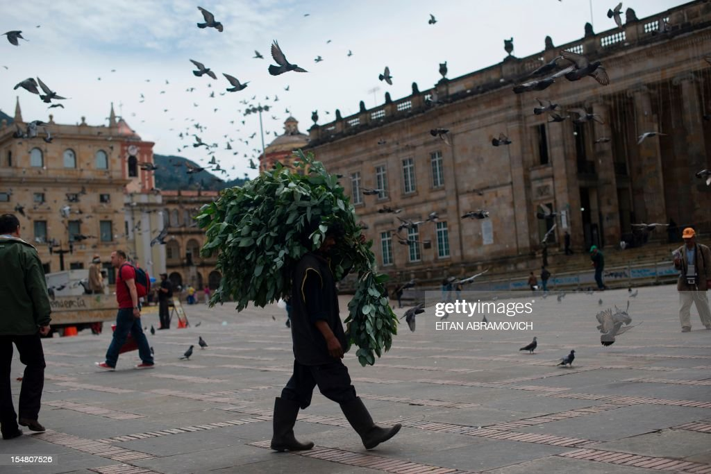 A man carries small branches with leafs as he crosses Bolivar Square in Bogota on October 26, 2012. AFP PHOTO/Eitan Abramovich /