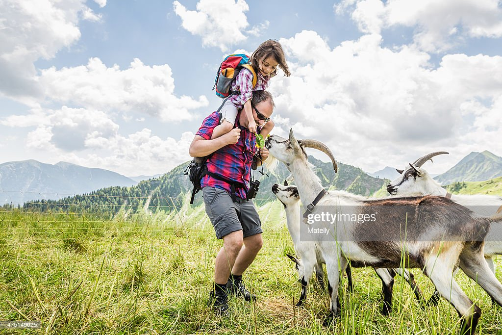 Man carrying daughter, looking at goats