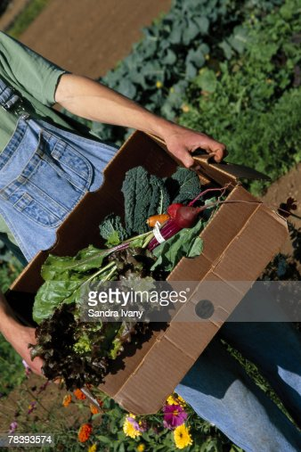Man carrying vegetables : Foto stock