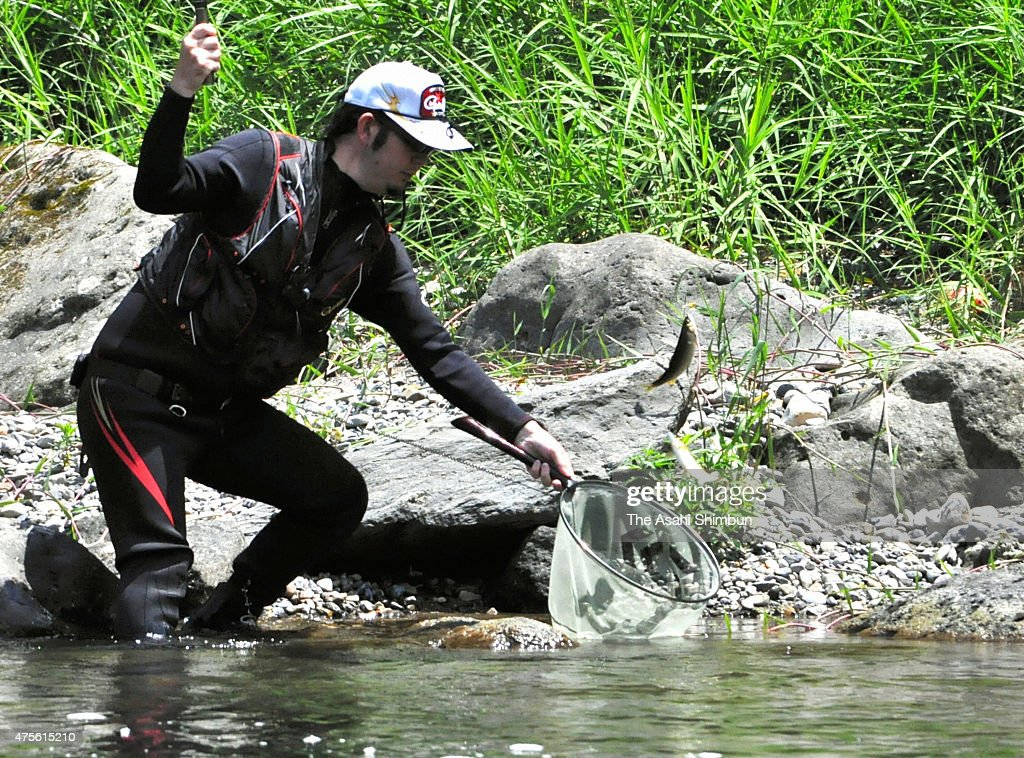 Ayu sweetfish fishing season begins across japan getty for What fish are in season