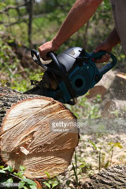Man chain sawing through a tree
