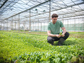 Man checking salad crop