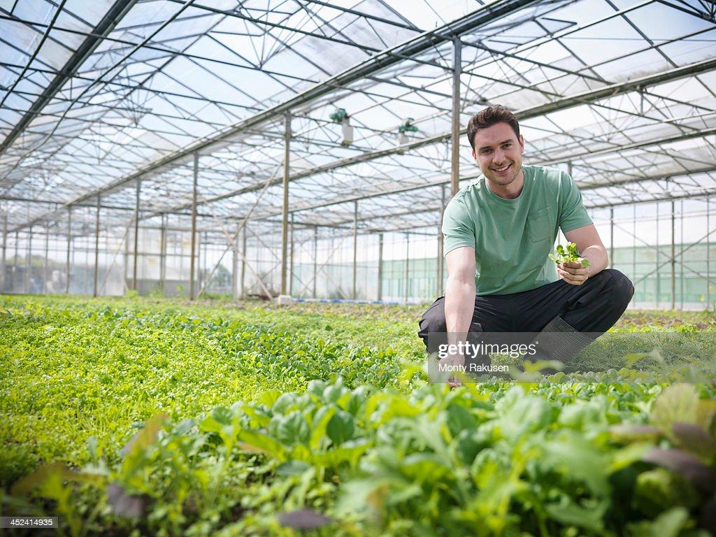 Man checking salad crop