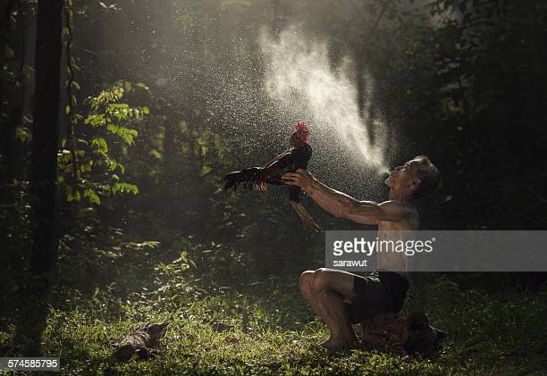 Man cleaning Thai gamecock