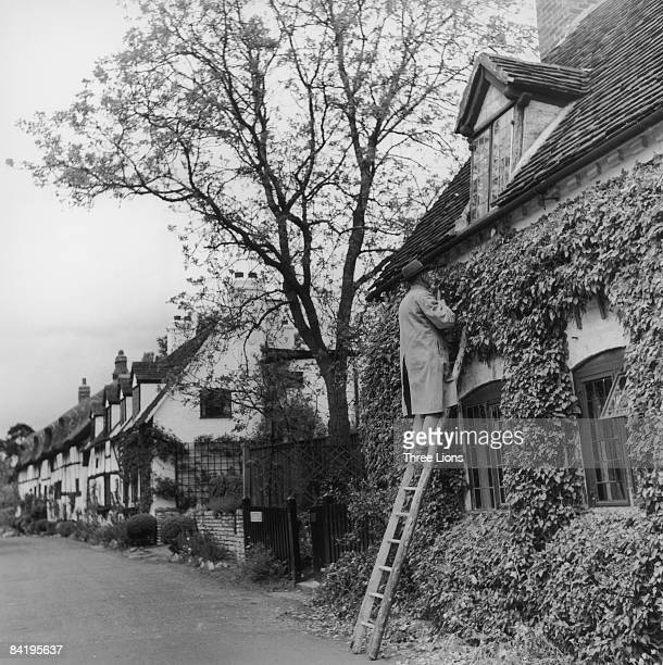 A man clipping the ivy on a housefront in StratforduponAvon Warwickshire circa 1955