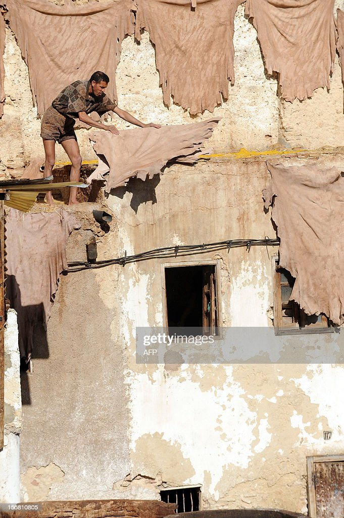 A man collects dried sheepskins on a roof of the tanneries in Fes on November 21, 2012 .AFP / PHOTO / FADEL