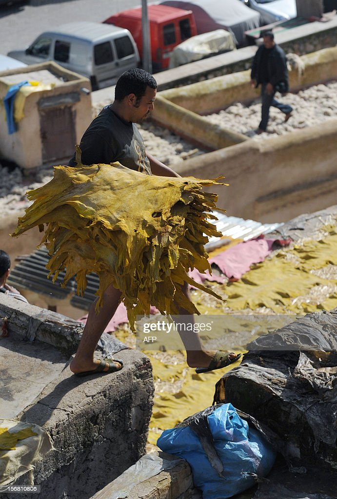 A man collects dried sheepskins on a roof of the tanneries in Fes on November 21, 2012 .AFP / PHOTO / FADEL SENNA