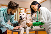 Man comforting his dog on vet table , cute nurse/ doctor examining the dog