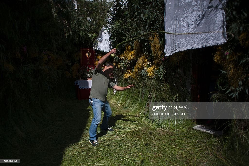 A man cracks a traditional 'cachiporra', a whip made with straw, during the Corpus Christi celebrations in El Gastor, southern Spain on May 29, 2016. The village of El Gastor celebrate the feast of Corpus Christi (or Body of Christ in Latin) covering the streets and facades of houses with branches of trees and grass. / AFP / JORGE