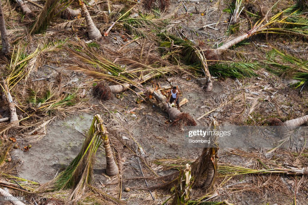 A man cuts open a coconut next to felled palm trees near Sulyan Village in Eastern Samar, the Philippines, on Wednesday, Nov. 20, 2013. Super Typhoon Haiyan slammed into the central Philippines on Nov. 8, knocking down most buildings, killing thousands, displacing 4 million people and affecting more than 10 million. Photographer: Julian Abram Wainwright/Bloomberg via Getty Images