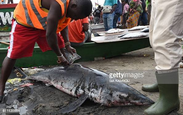 A man cuts the dorsal fin of a shark at the Abobo Doume fish market in Abidjan on September 29 2016 / AFP / Sia KAMBOU