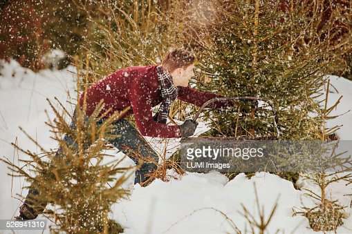 Man cutting a Christmas tree in the forest, Bavaria, Germany : Stockfoto