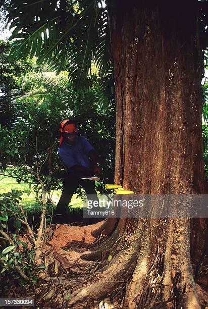 Man Cutting Down Tree