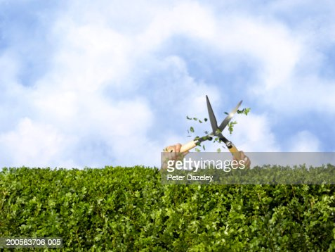 Man cutting hedge with trimmings flying (only arms visible)