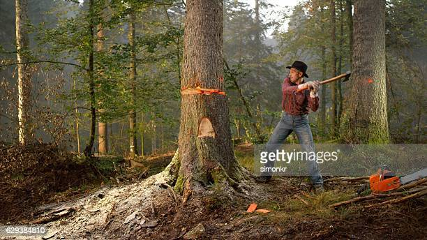 Man cutting tree in forest