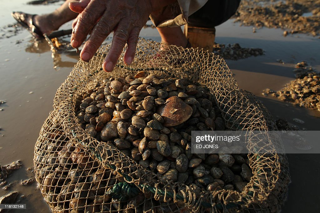 A man digs for clams at low tide on Lantau island, Hong Kong on July 3, 2011. Whether for business or pleasure, the tradition of digging for clams is a regular draw for residents of Hong Kong's outlying islands. Bounty hunters prepared to spend hours hunched over barnacled rocks can expect a sure reward for their currency of clams from the ever-present nearby seafood establisments only too happy to serve up a hard-won catch. AFP PHOTO / ED JONES