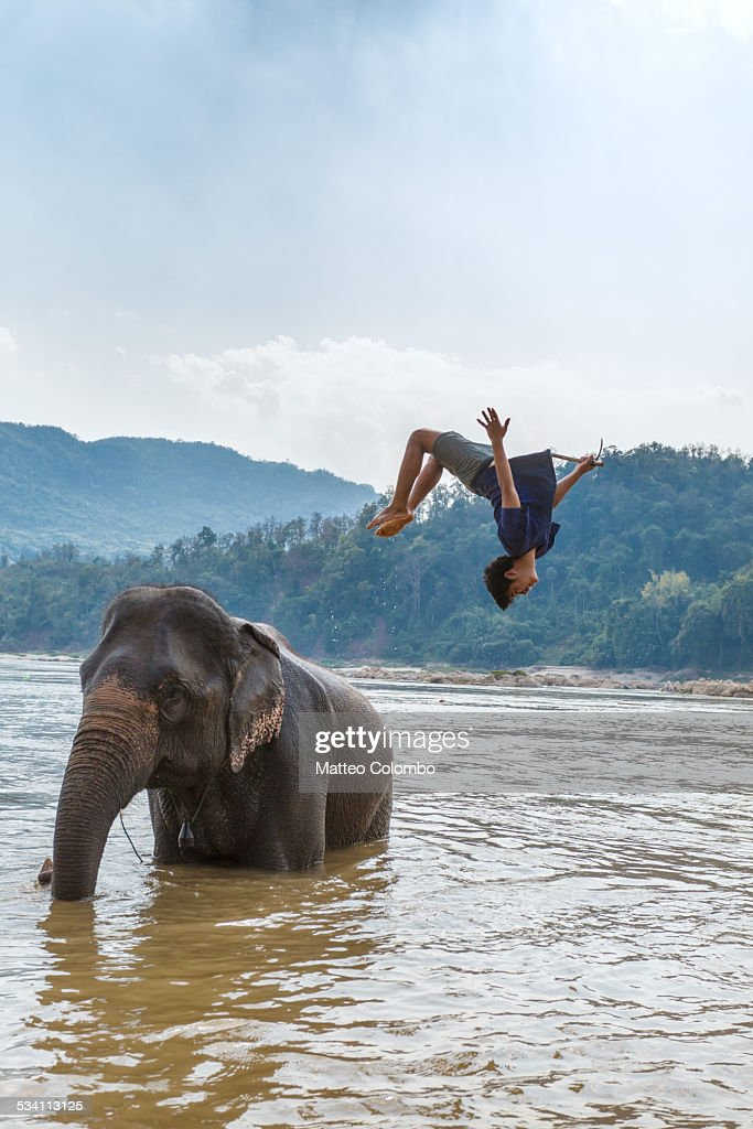 Man doing a back somersault from an elephant, Laos : Stock Photo