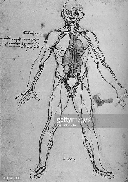 Man Drawn as an Anatomical Figure to Show the Heart Lungs and Main Arteries' c1480 From The Drawings of Leonardo da Vinci [Reynal Hitchcock New York...