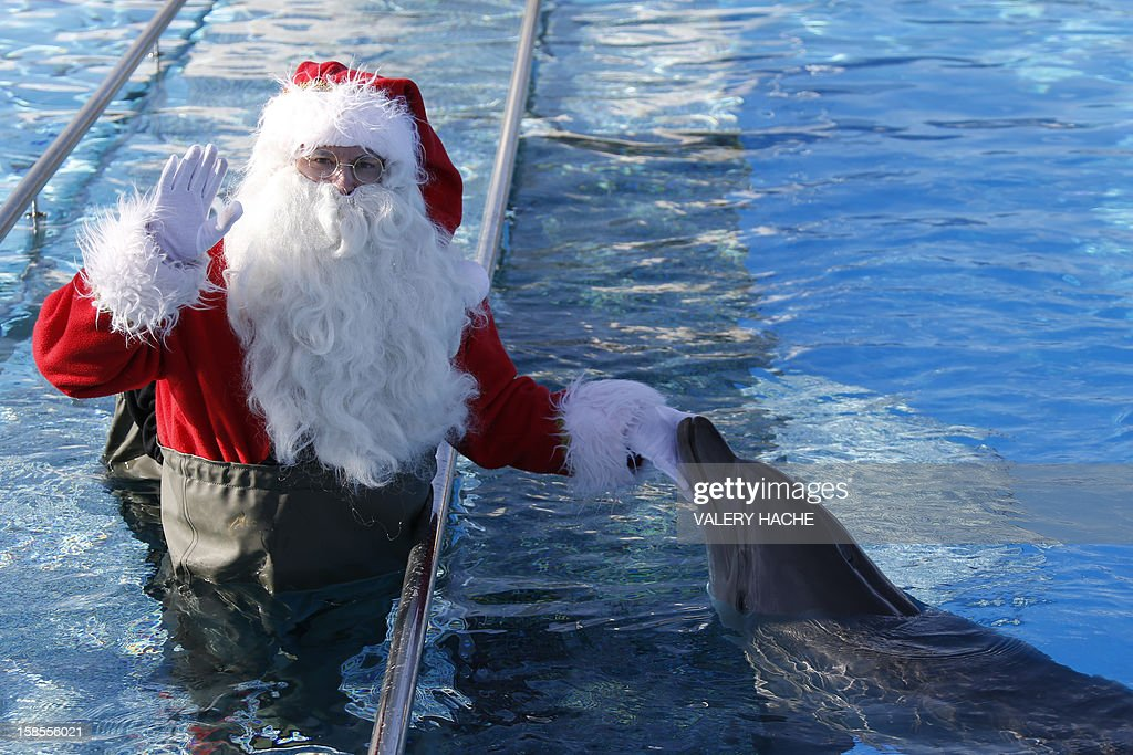 A man dressed in a Santa Claus costume poses with a dolphin at the animal exhibition park Marineland, on December 19, 2012 in Antibes, southeastern France.