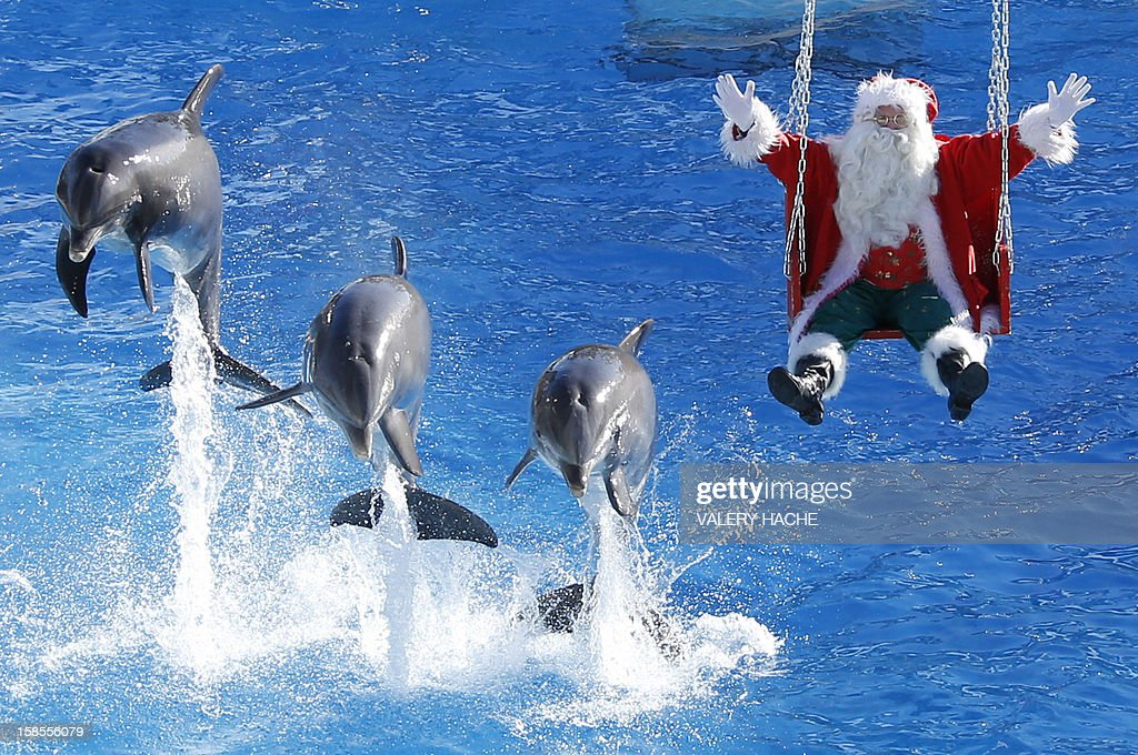 A man dressed in a Santa Claus costume poses with dolphins, at the animal exhibition park Marineland, on December 19, 2012 in Antibes, southeastern France.