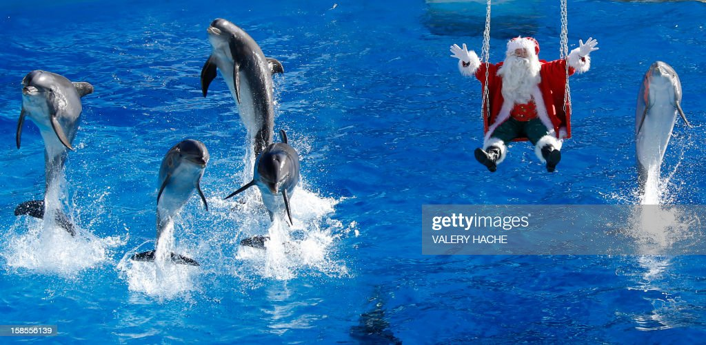 A man dressed in a Santa Claus costume poses with dolphins, at the animal exhibition park Marineland, on December 19, 2012 in Antibes, southeastern France. AFP PHOTO / VALERY HACHE