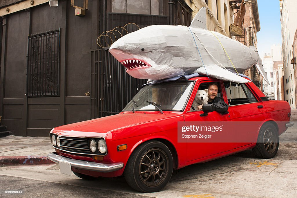 man driving car with papier-mache shark on roof : Stock Photo