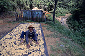 Man drying highland coffee beans, Danlo Pass.