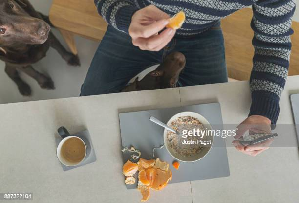 Man eating breakfast with dogs around