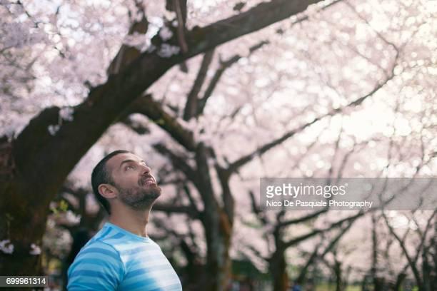 Man enjoying Sakura