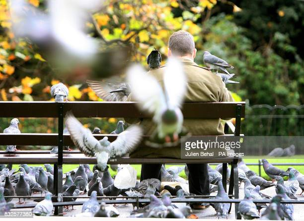 A man enjoys some time alone feeding pigeons who swarm around him on a bench in StStephens Green Dublin on Wednesday November 8 2006
