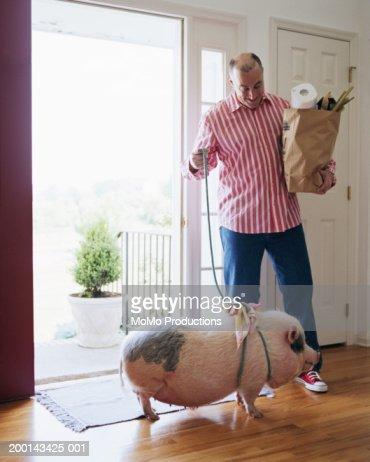 Man entering home with groceries and pig on leash
