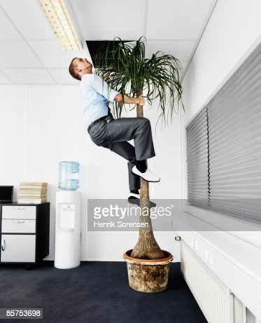Man escaping the office via a palm tree. : ストックフォト