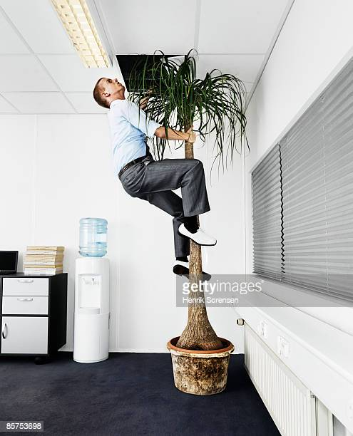 Man escaping the office via a palm tree.