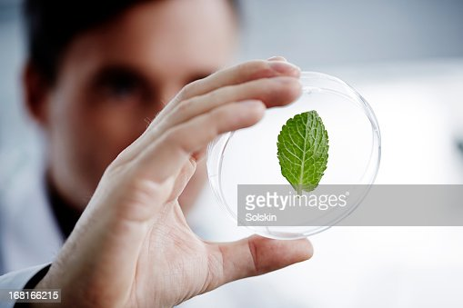 Man examining a green leaf in laboratory : Stock Photo